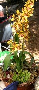 orchids at wedding STUDIO TULLIA 2
