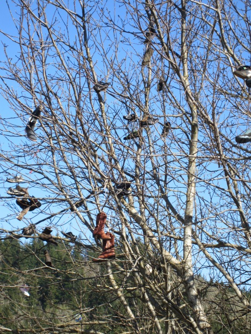 White Salmon shoe tree