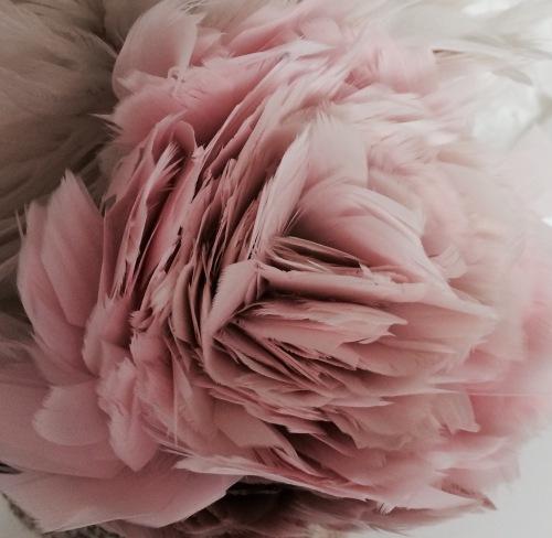 Pink Feathers Studio Tullia 2.12.16.jpg